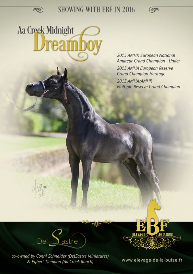 Showsaison 2016 für Aa Creek Midnight Dreamboy