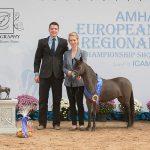 2016 AMHA European Championship Show