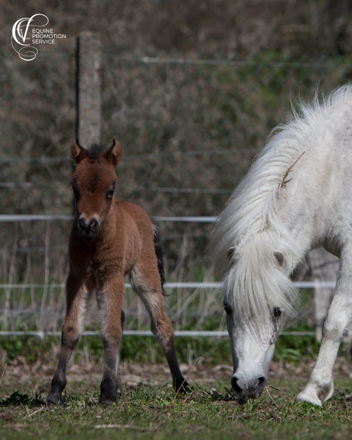 Our Miniature foal was born 1