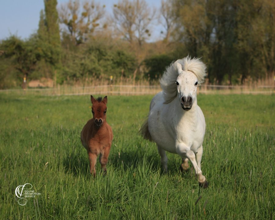 Some thoughts about horse breeding