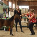 ACHMK Czech Championships for Miniature Horses 2017