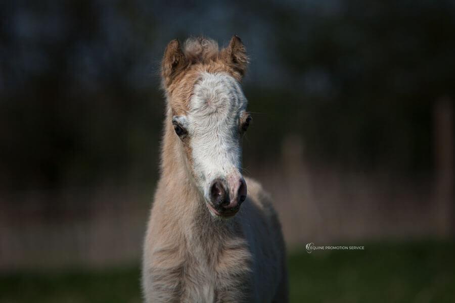 New Foal Photos