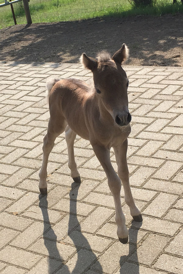 Our second foal in 2018 was born