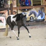 Cross J Painted Gem, American Shetland Pony