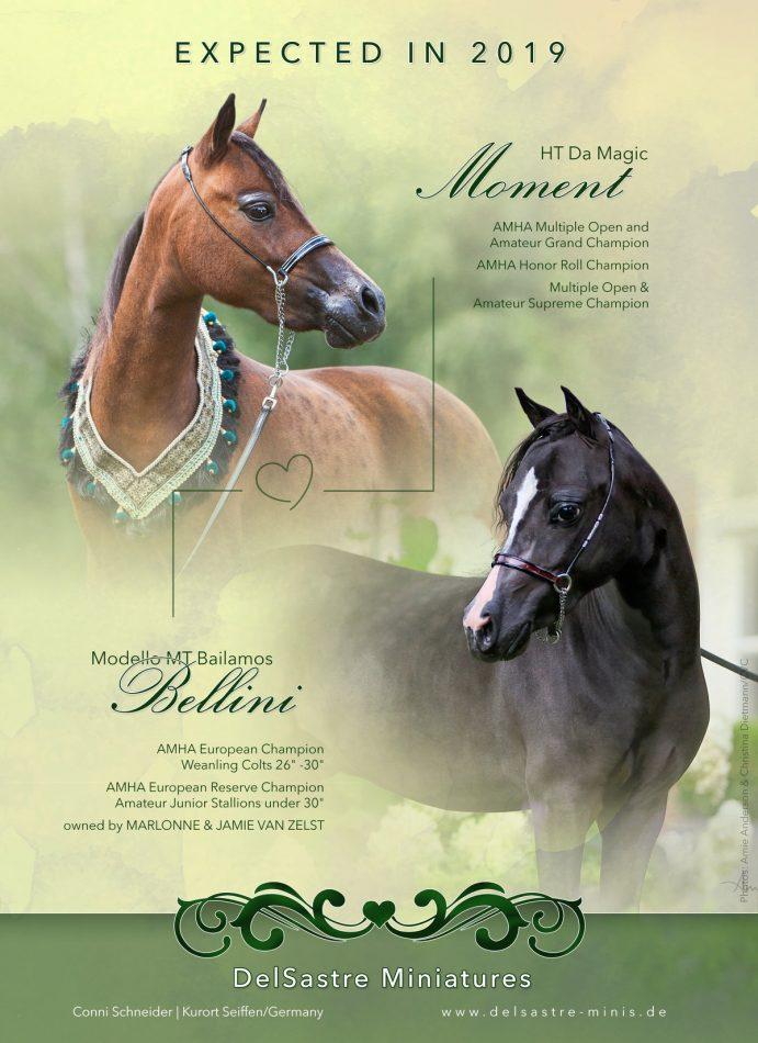Expected American Miniature Foals 2019 - AMHA/AMHR