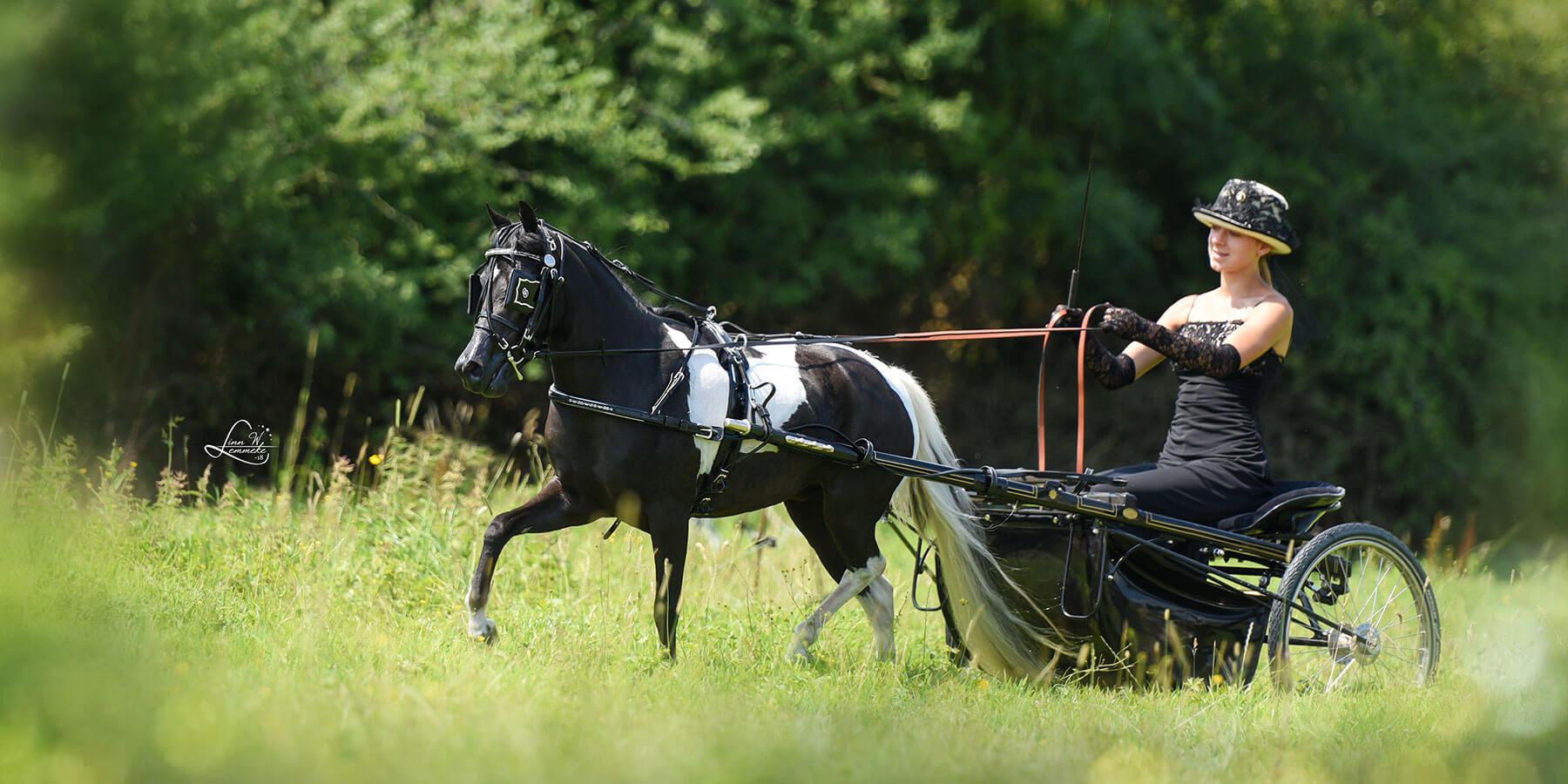 Amerikanische Miniaturpferde in Deutschland
