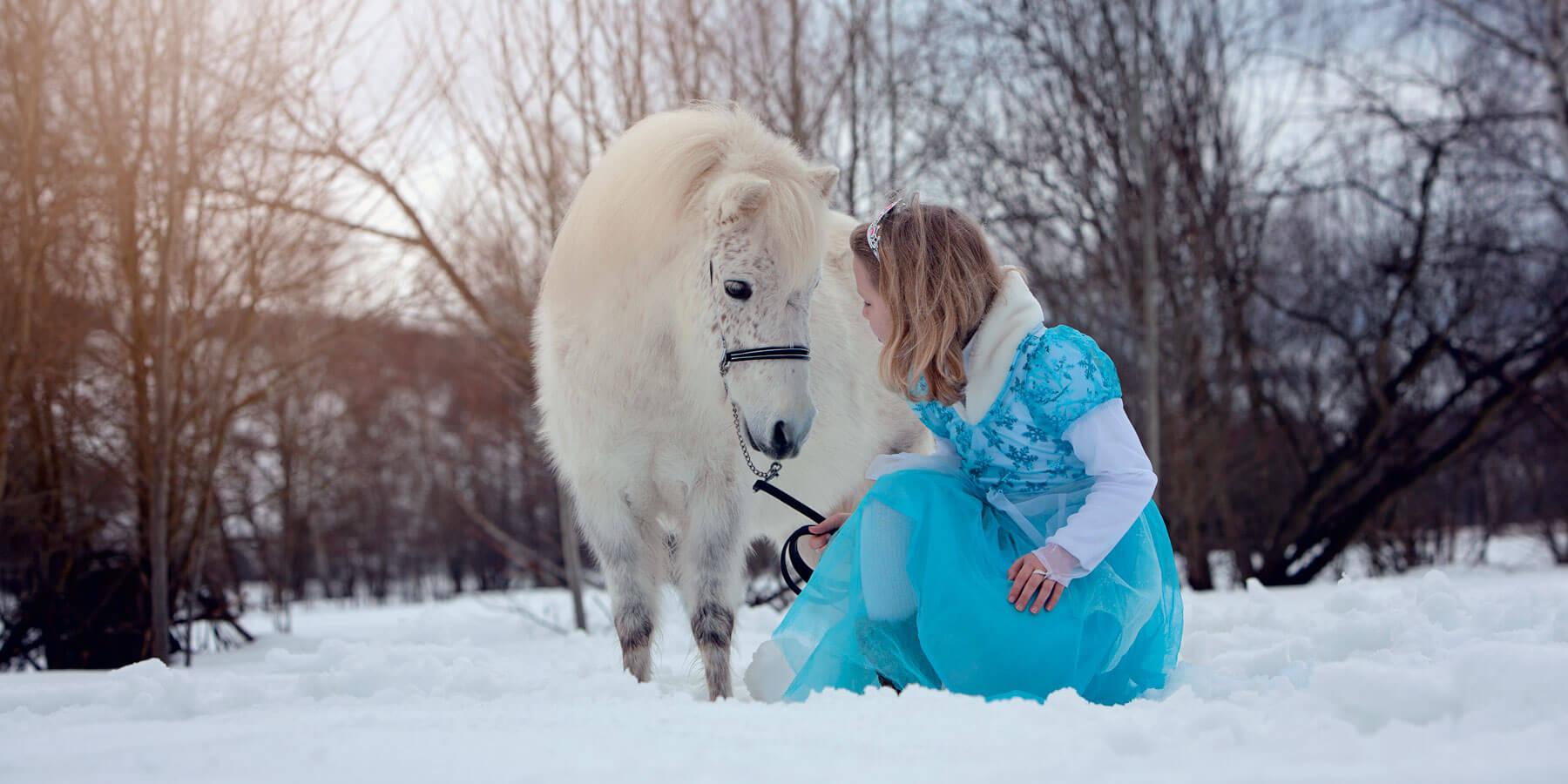 Amerikanische Miniaturpferde zu verkaufen