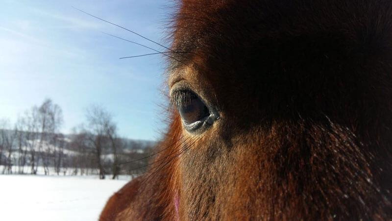 Schnell noch ein paar Winterfotos... 2
