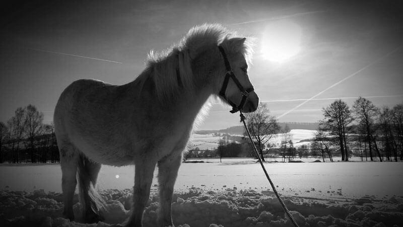 Schnell noch ein paar Winterfotos... 3
