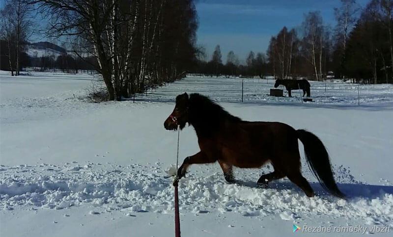Schnell noch ein paar Winterfotos... 5