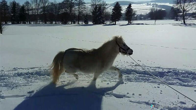 Schnell noch ein paar Winterfotos... 6