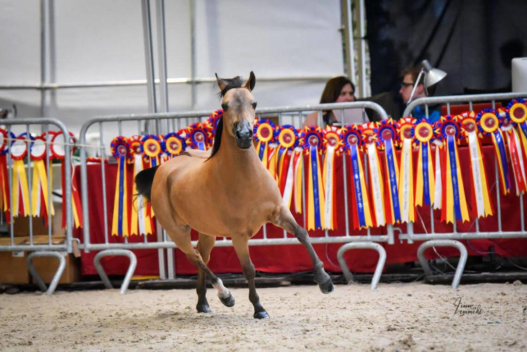 Erfolge auf der Equuspirit Show 2019 in Belgien 15