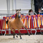 Success at the Equuspirit Show 2019 in Belgium
