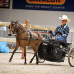 American Miniature Horse in Western Country Pleasure Driving