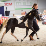 Gem & Monia in AMHR Amateur Mares