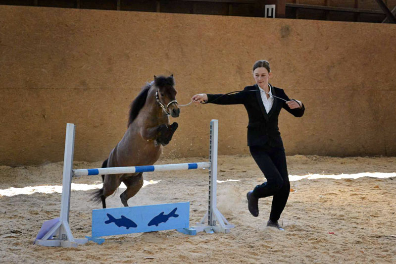 American Miniature Horse jumping