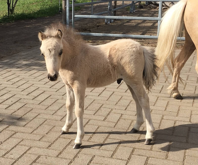 Miniature Foals 2019 1