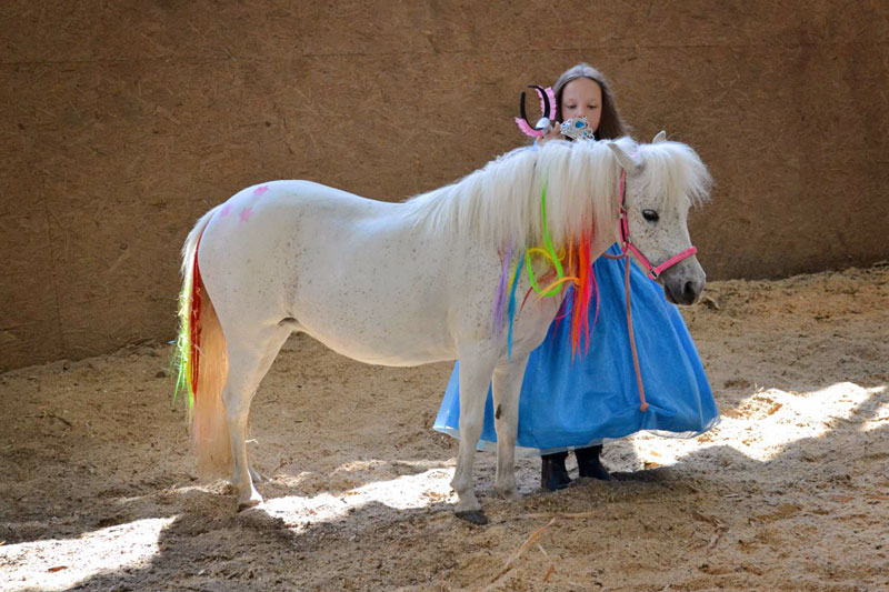 Spring Show for Miniature Horses in the Czech Republic