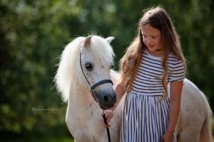 Amerikanische Miniaturpferde zu verkaufen 7