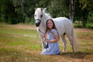Amerikanische Miniaturpferde zu verkaufen 3