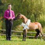 American Miniature Horse mare