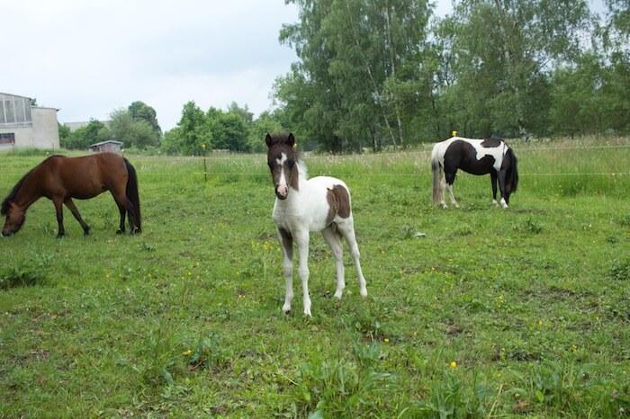 Neue Fotos unserer Mini-Fohlen 4