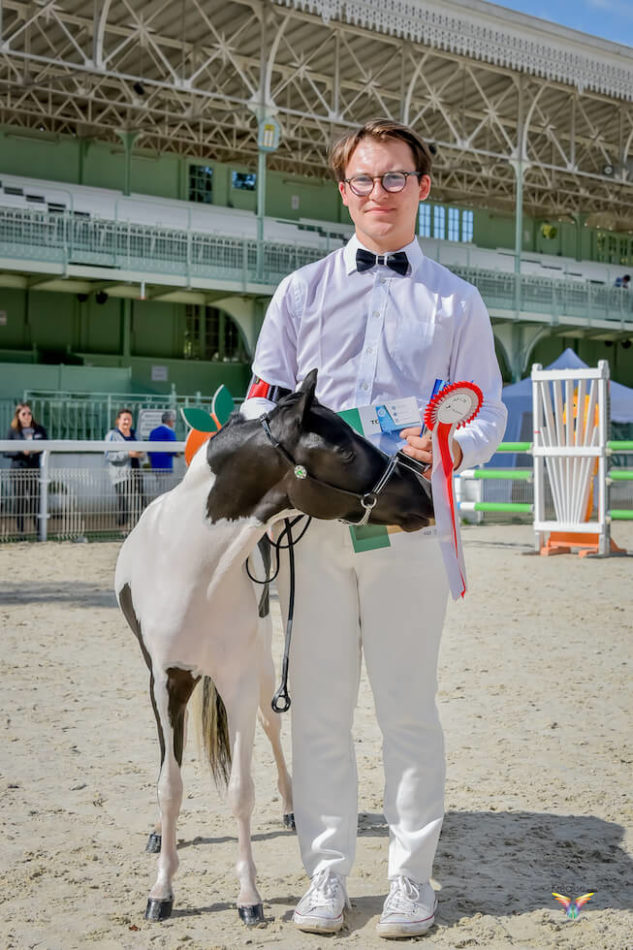 DelSastre Dakota's One In A Million, 2020 AMHR/ASPC stallion